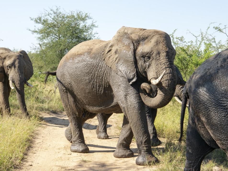 Sebakwe_elephant_herd_campjabulani