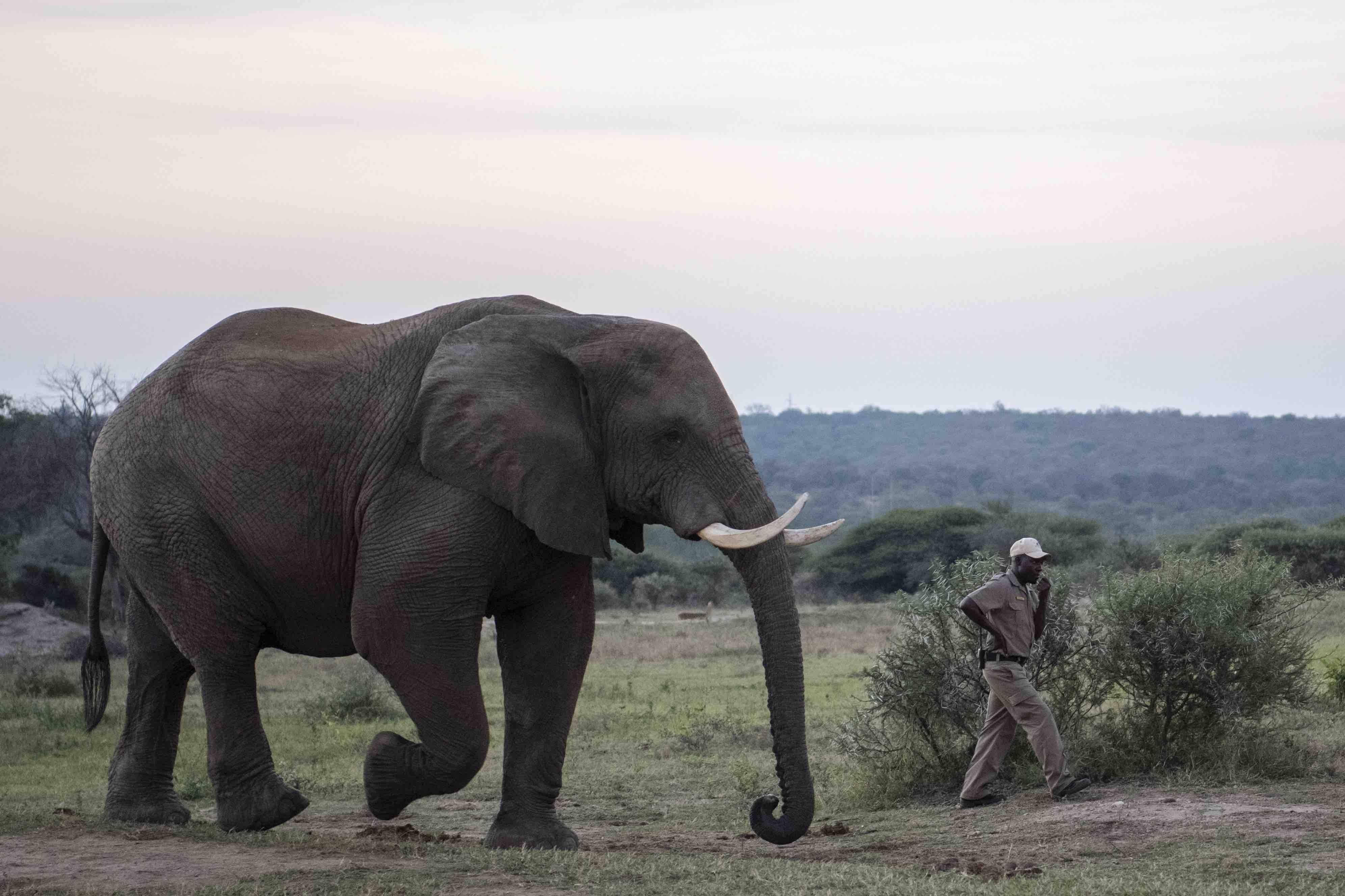 Sebakwe_Owen-elephant_carer_campjabulani
