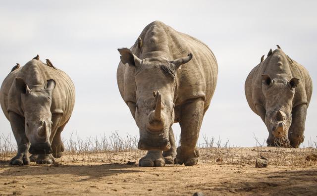 Crash_rhino_jabulani_wildlife