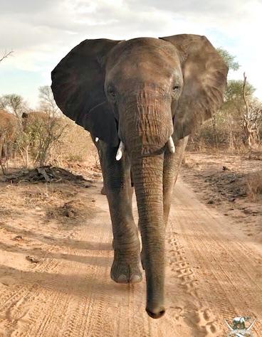 Zindoga_elephant_Jabulani