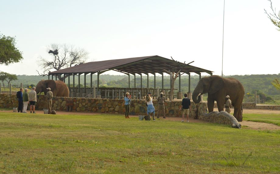 Elephants at the Stables
