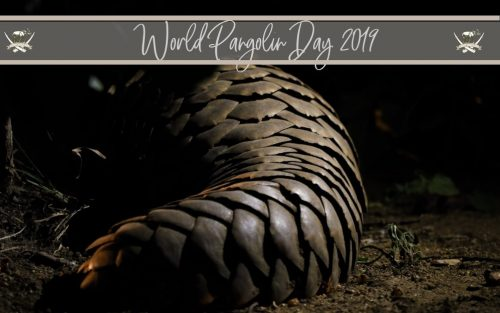 World_Pangolin_Day_2019_campjabulani