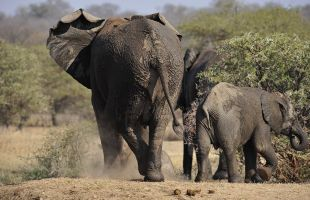 Camp Jabulani Elephants