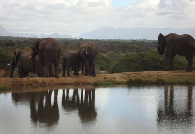 Camp Jabulani - Joe the Elephant