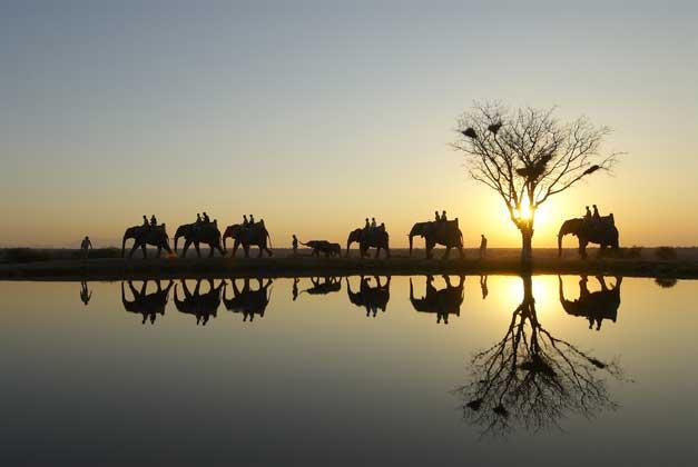 Camp Jabulani - Elephant Back Safari
