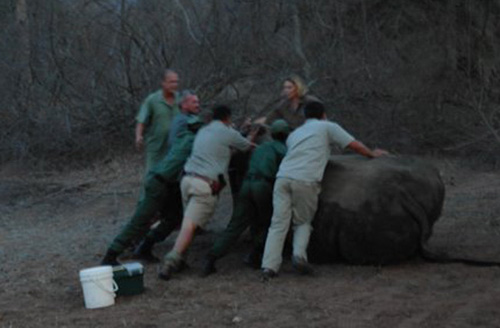 Rhino found on Hongonyi Reserve, November 2011