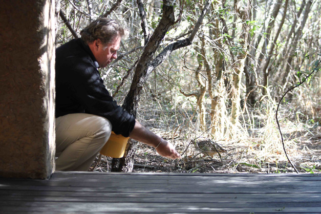Carl feeds a Crested francolin