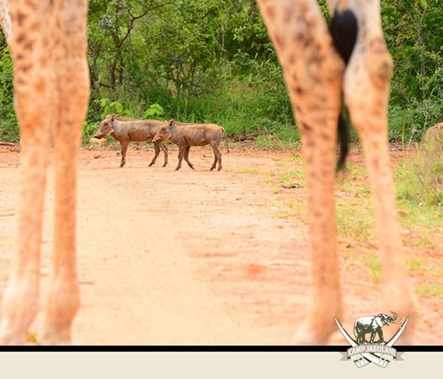 Wildlife Kapama Game Reserve