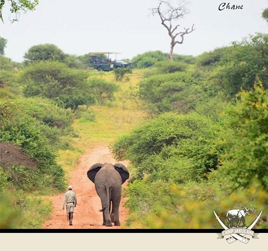 Elephant Herd Camp Jabulani