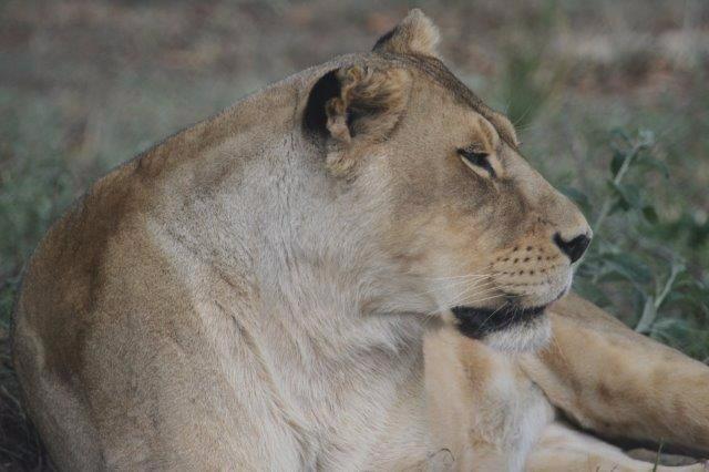 Kapama Game Reserve Wildlife