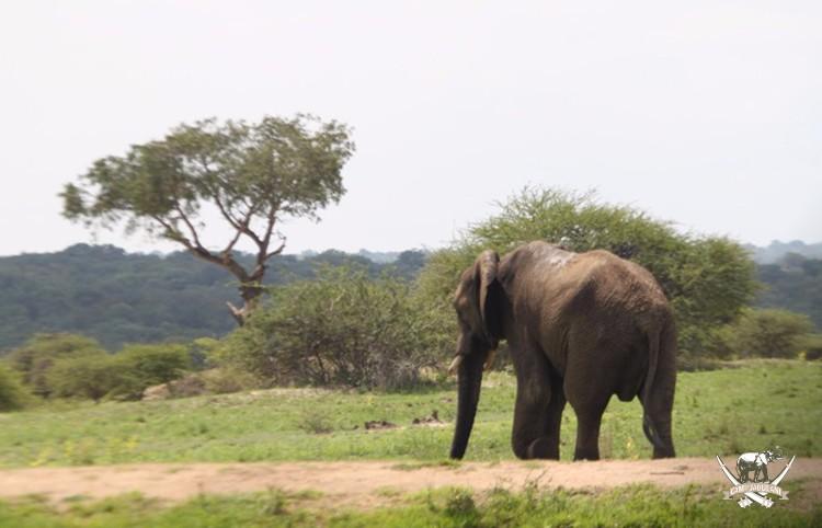 CJ_Elephants_19March16-221-copy