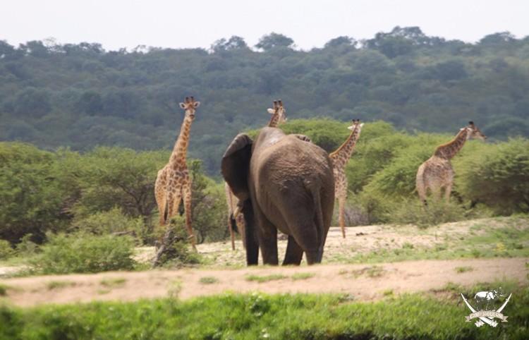 CJ_Elephants_19March16-234-copy