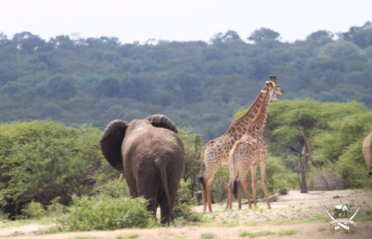 CJ_Elephants_19March16-246-copy