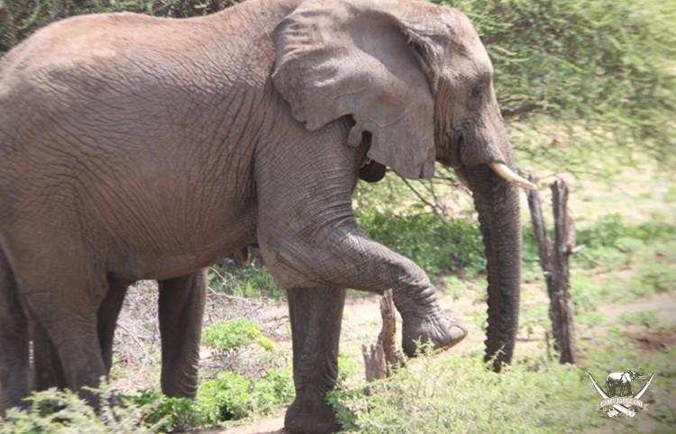 CJ_Elephants_19March16-306-copy