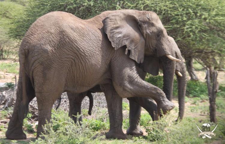 CJ_Elephants_19March16-324-copy