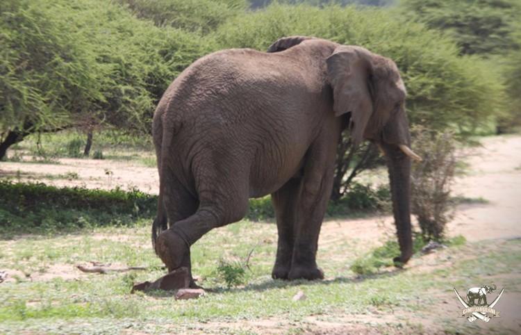 CJ_Elephants_19March16-387-copy