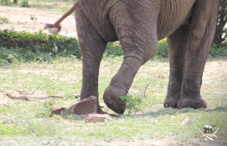 CJ_Elephants_19March16-388-copy