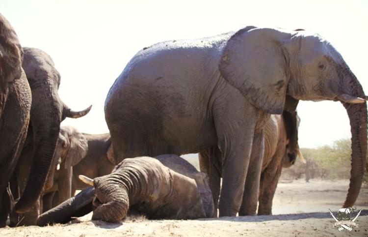 CJ_Elephants_Mudpool_Aug16-95 (1)