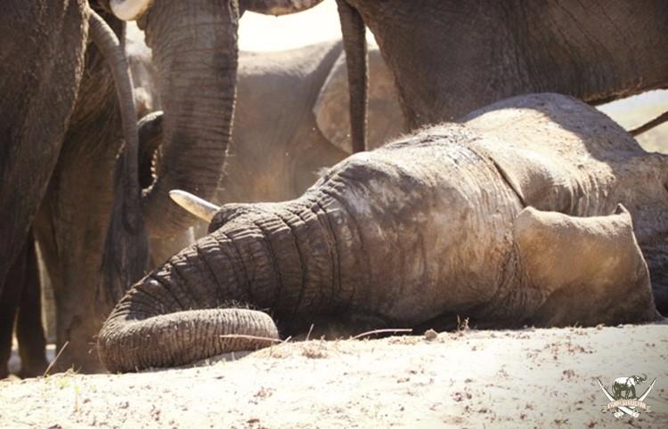CJ_Elephants_Mudpool_Aug16-96 (1)