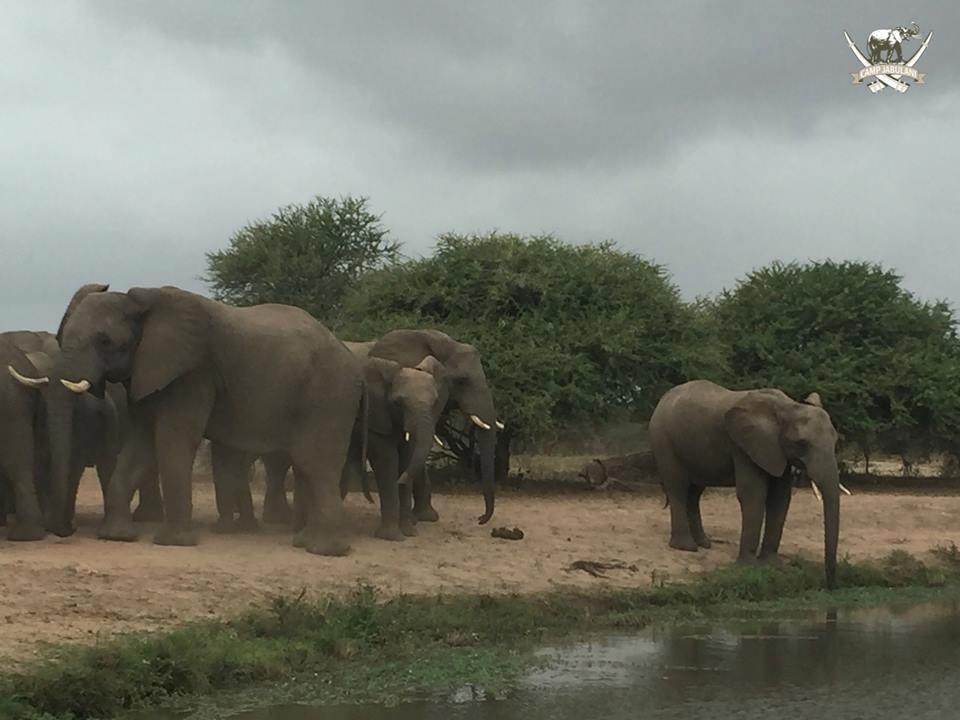 camp-jabulani-elephant-herd