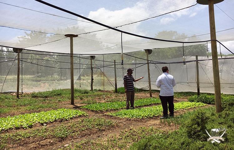 Camp Jabulani chef visits Hlokomela