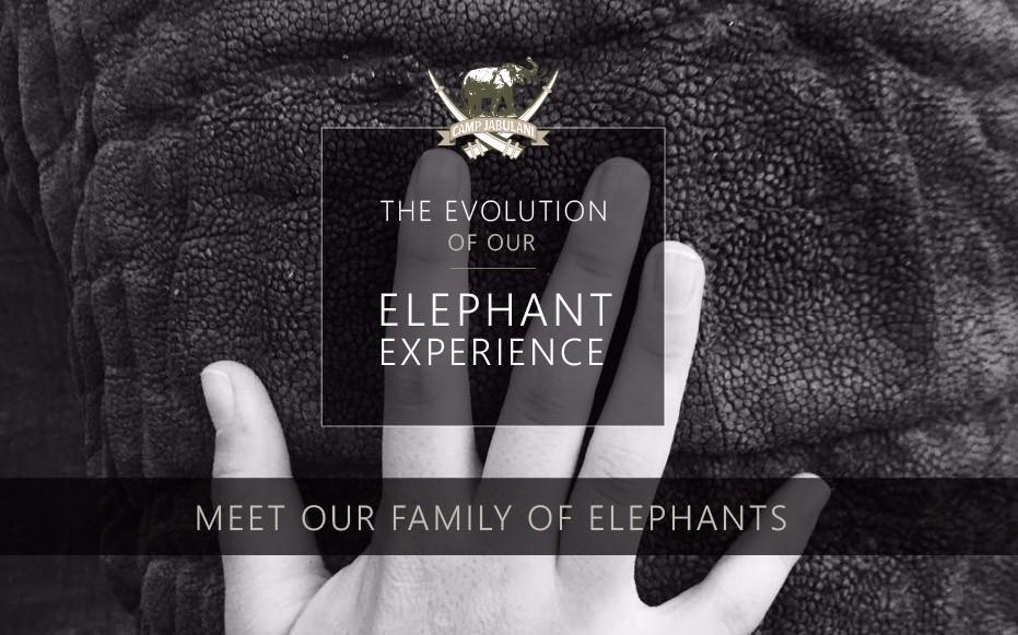 CJ-Elephant-Interaction-Blog-1